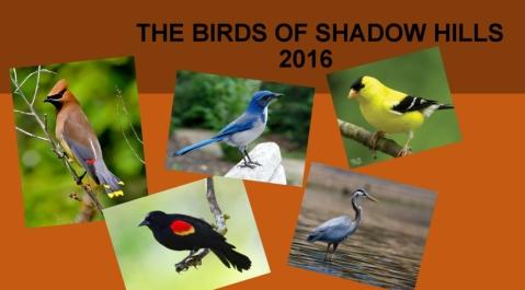 AudubonBirds-1