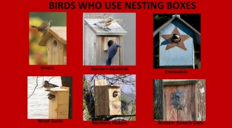 AudubonBirds-15