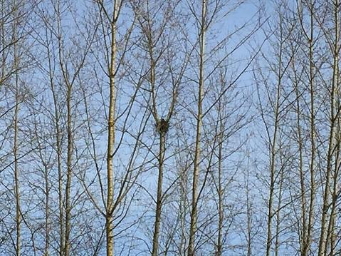 Birdhouses-OwlsNest
